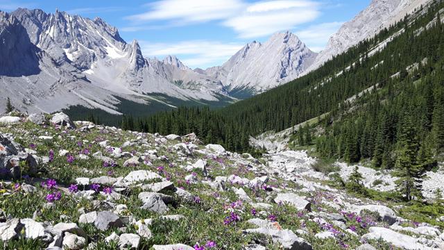Hiking the Rae Glacier Trail Kananaskis